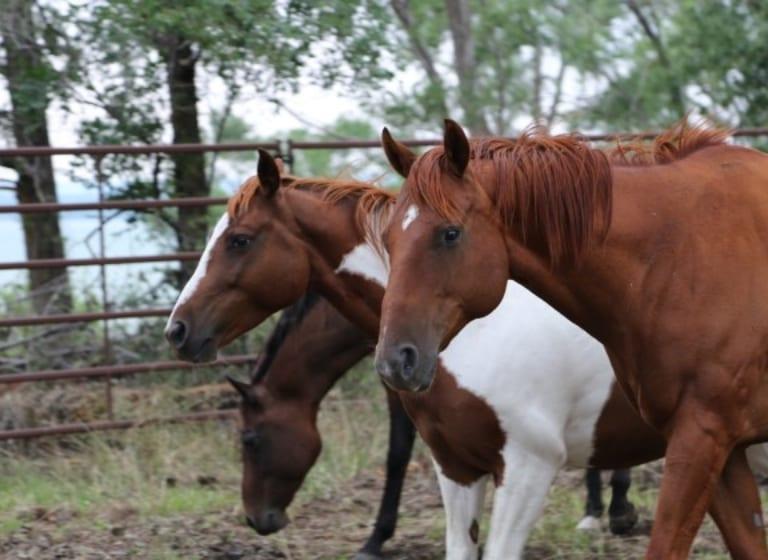 Die Kraft des Pferdes: Schüler nehmen an der Pferde-Therapie teil