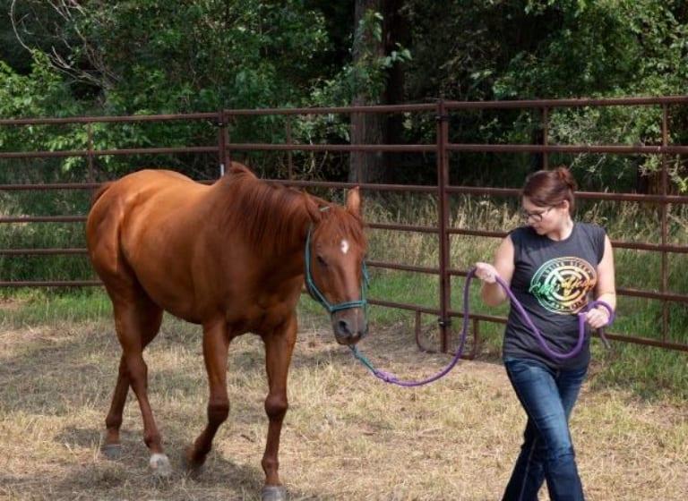 Wie Pferde den Schülern bei der Heilung helfen