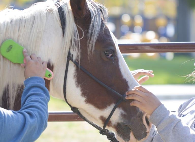 Auf den Erfolg des Pferdetherapie-Programms aufbauen