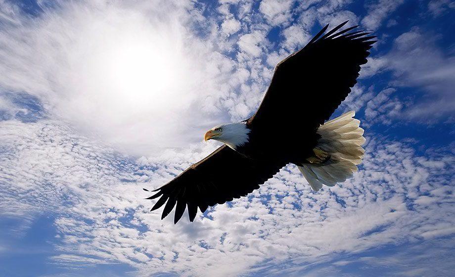 Croyances lakotas - L' aigle sacré